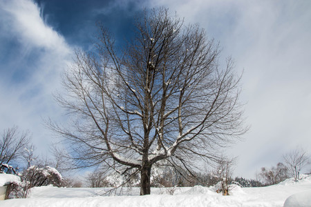 Single snow covered tree in winter mountain scene, winter resort Smolyan, Bulgaria, Rhodope Mountains. Beautiful mountain landscape, blue sky with clouds 写真素材