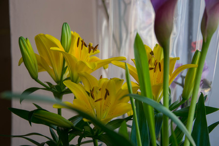Bunch of beautiful yellow lilium, Lilly plant in a flower shop, close-up pollen, blooming bouquet for 8 march, mother's day, women's day, valentine's day Stock Photo