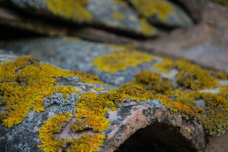Close-up of roof tiles covered with yellow and gray lichen. Old tiles with lichen moss. Rough structure background.