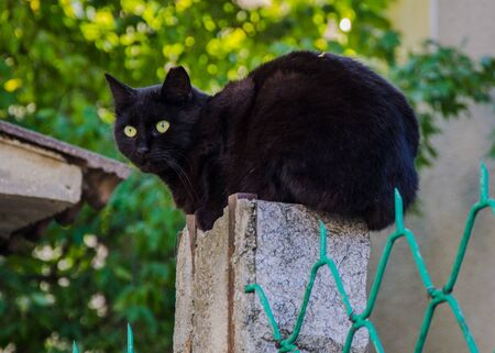 Beautiful black cat sitting on a fence of a house, watching