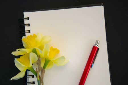 Fresh spring yellow daffodil flower, empty textbook paper with empty place for text, copy space, romantic concept, black background