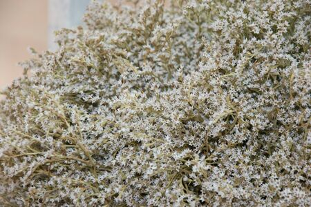 Close-up of dried caspia flower for bouquet, Limonium, sea lavander, white statice, marsh rosemary background