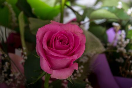 Beautiful pink roses, close-up of a flower in a shop, selective focus, blooming bouquet for 8 march holiday