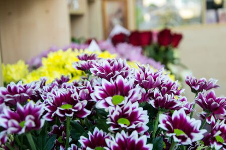 Bunch of pretty colorful chrisantemum in a flowershop, close-up, blooming bouquet for 8 march, valentine's day, selective focus