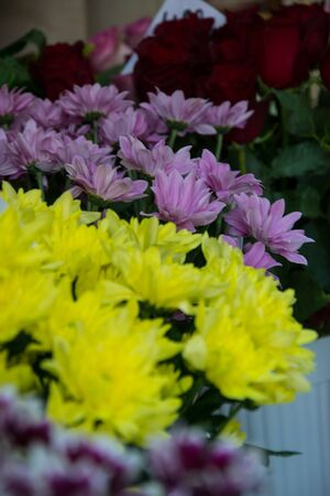 Bunch of pretty colorful chrisantemum in a flowershop, close-up, blooming bouquet for 8 march, valentines day, selective focus