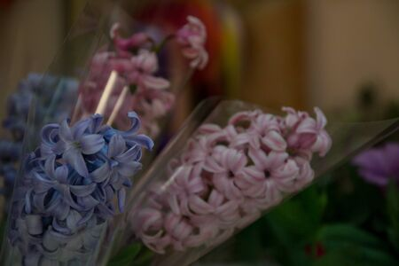 Close-up of beautiful hyacinth flower bouquet in a flower shop, blooming flowers for present, valentines day, 8 march