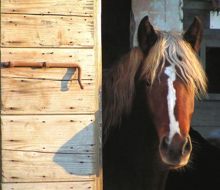Window with Horse Stock Photo