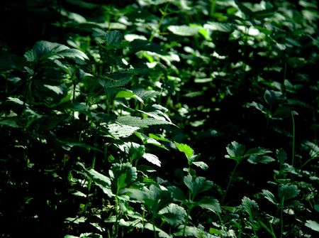 underbrush: Underbrush Light