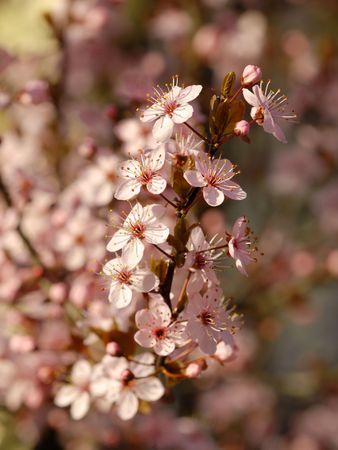 particolare: Primavera Albero particolare