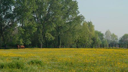 Spring Yellow Field photo