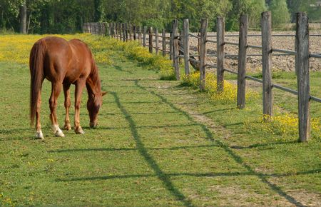 eating horse near a fence  Stock Photo