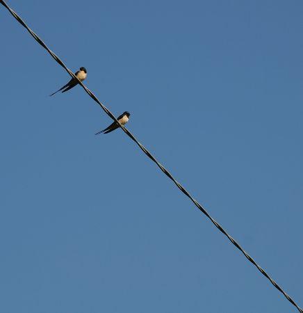 Deux hirondelles sur un fil