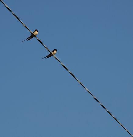 two swallows on a wire