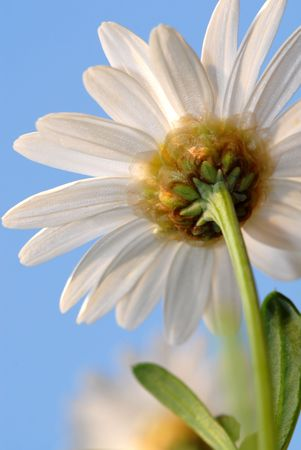 Particulars of daisy flower on natural sky background