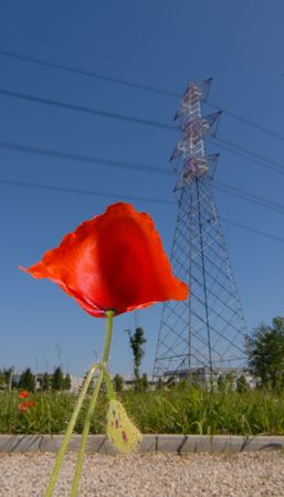 Poppy and Pylon: CLEAN ENERGY, PLEASE !! photo