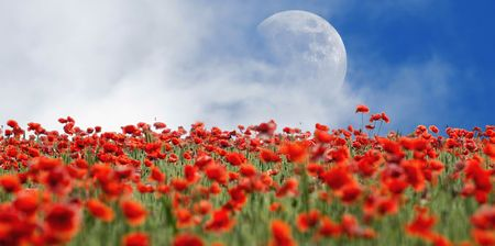 Poppies and Moon Stock Photo