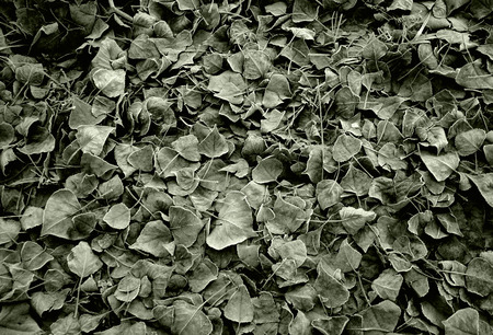Autumnal background of frozen dry leaves