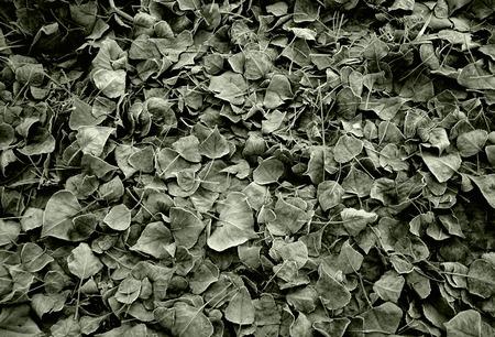 hojas secas: Oto�ales de fondo de hojas secas congeladas
