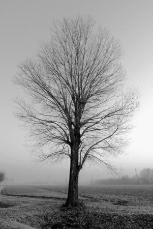 Autumnal Tree Stock Photo