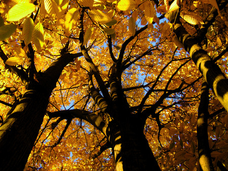 Autumnal tree from inside Standard-Bild