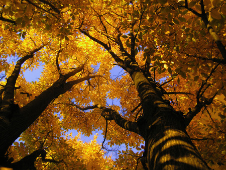 underbrush: Autumnal tree from inside Stock Photo