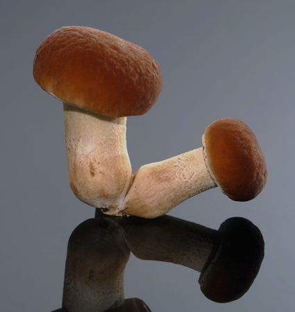 Autumnal taste: Mushrooms photo