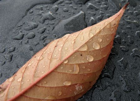 matallic: Autumn: Wet leaf after the rain on matallic dark background