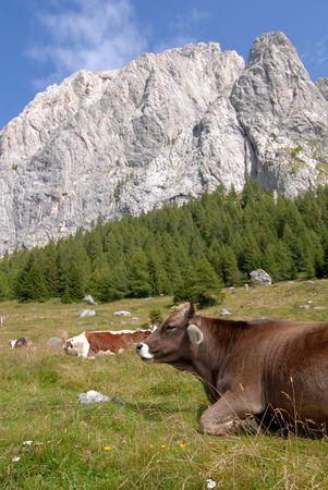 pastureland: Mountain Pastureland Stock Photo