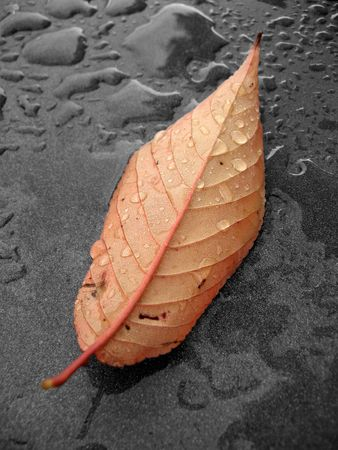Autumn: Wet leaf after the rain on metallic dark background