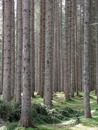 Vertikal-Protokolle in einem Wald  Standard-Bild - 2173698