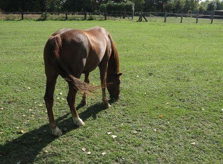 pastureland: Backlighted grazing horse Stock Photo