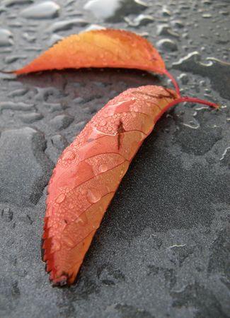 Autumn: Wet leaf after the rain on metallic dark background photo
