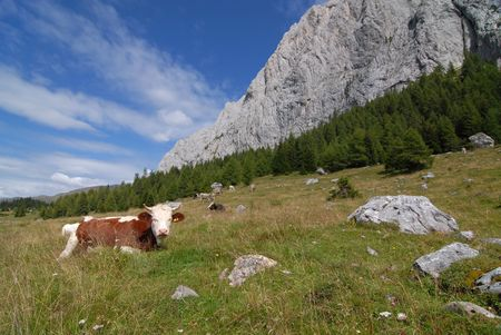 pastureland: Alpine Pastureland
