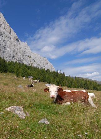 pastureland: Alpine Meadow Stock Photo