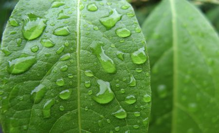 Wet green leaves photo
