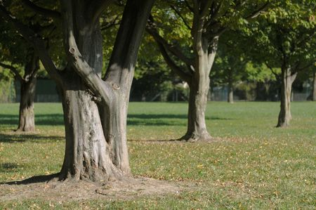 relaxant: Group of tree in a metropark Stock Photo