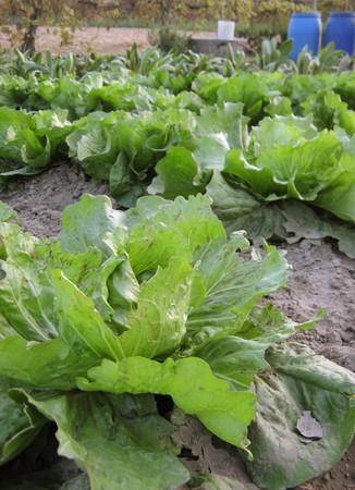 agricultura: Biological kitchen garden