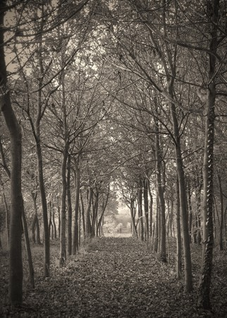 Sepia toned forest photo