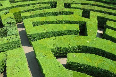 Hecken Labyrinth Standard-Bild - 4892181