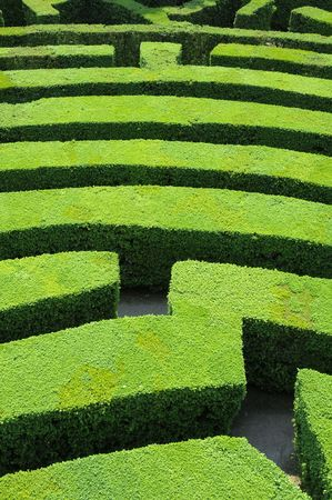 Hedges labyrinth Standard-Bild