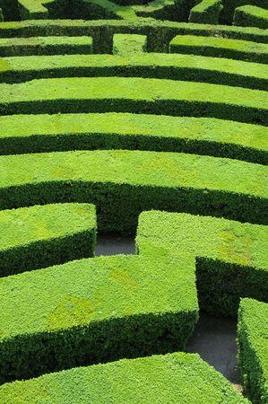 Hedges labyrinth Stock Photo - 4935284