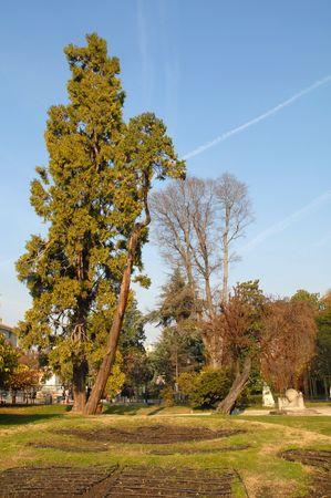 composition vertical: Parco urbano, la composizione verticale