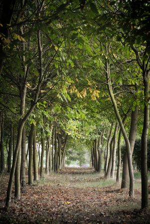 woodland path: Autumnal forest Stock Photo