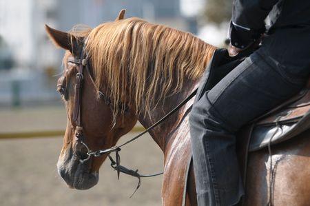 jinete: Detalle de caballo y jinete