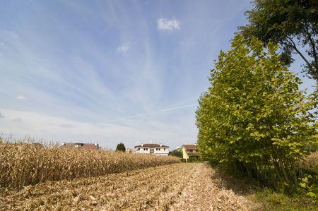 periferia: Campi coltivati lungo i confini urbani Archivio Fotografico