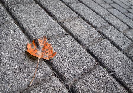 dode bladeren: November leaf langs een pad Stockfoto