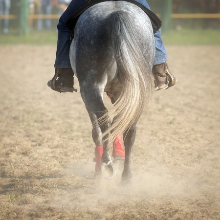 Horse back with raider while walking on dirty ground  photo