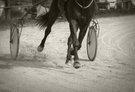 horse harness: Harness racing Stock Photo