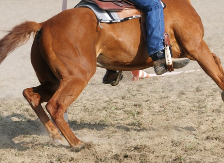 Horse in action photo