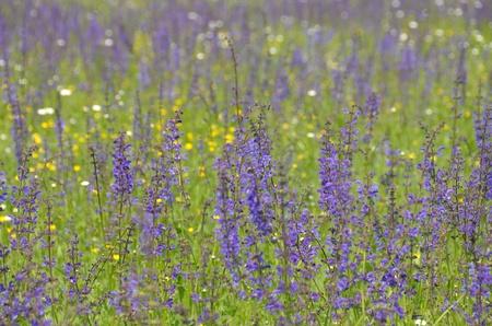 meadowland: Springtime wildflowers